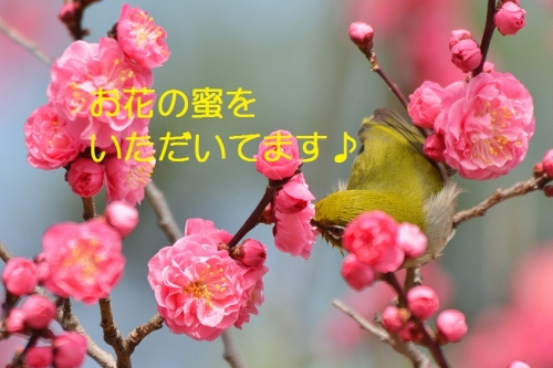 170_20160328202424ed0.jpg