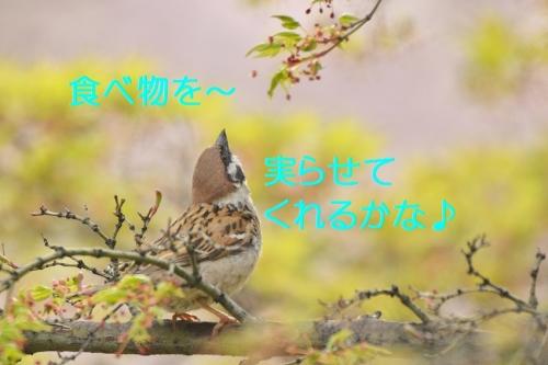 170_20160411180241a5c.jpg