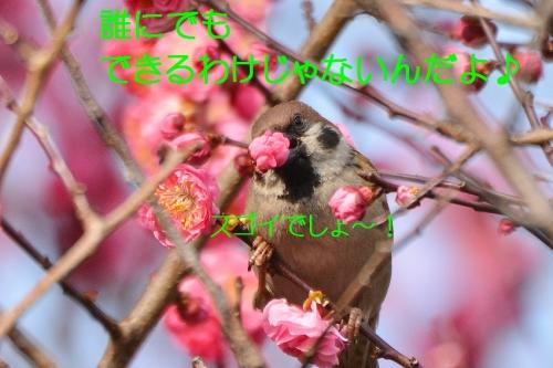 180_201603152048533dc.jpg