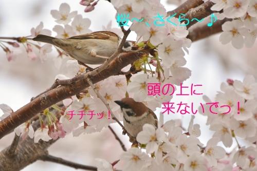210_20160406184038b1a.jpg