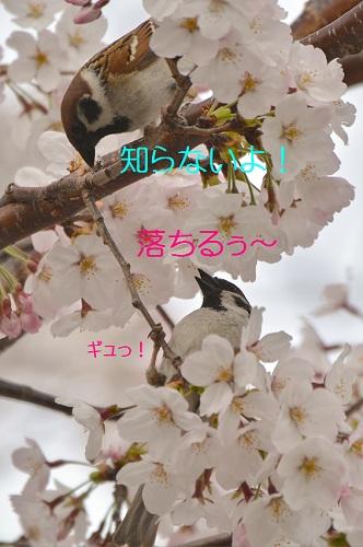 230_201604061840408cf.jpg