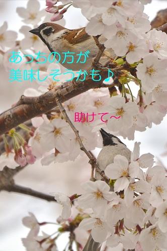 240_20160406184042c40.jpg
