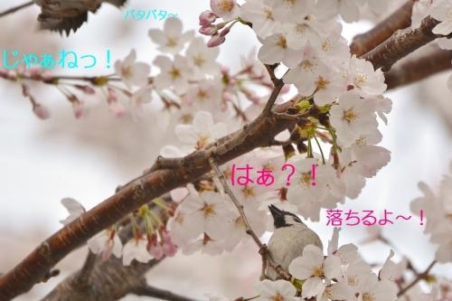 250_201604061840436fd.jpg