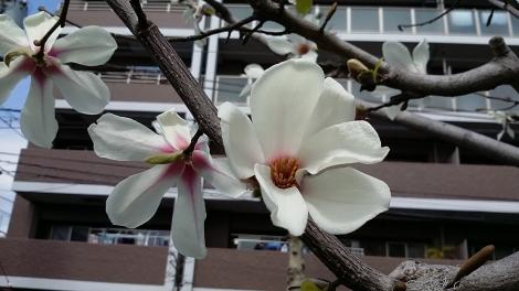 2016 03 27春通勤路 (4)