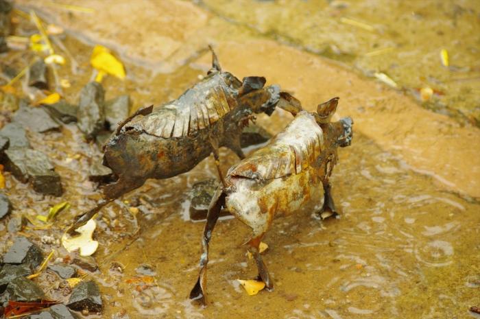 ビクトリアフォールズで大雨 (6)