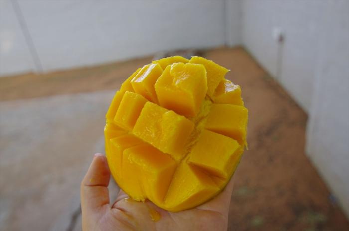 ボツワナマンゴー (4)