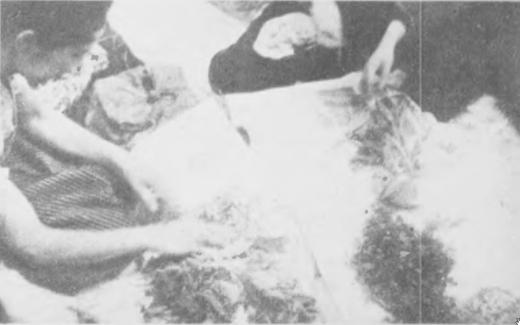 戦時中 野草を食べる会2