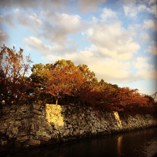 徳島中央公園 紅葉