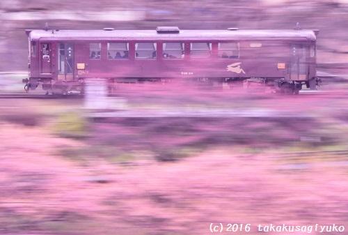DSC_7678a1_01.jpg