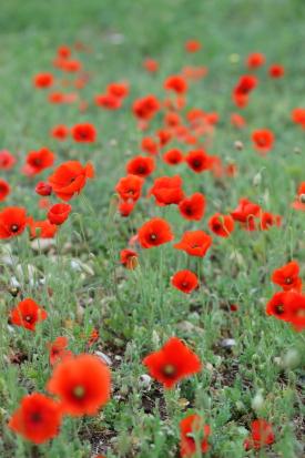 16-03-15_pfos-cyprus-0145.jpg