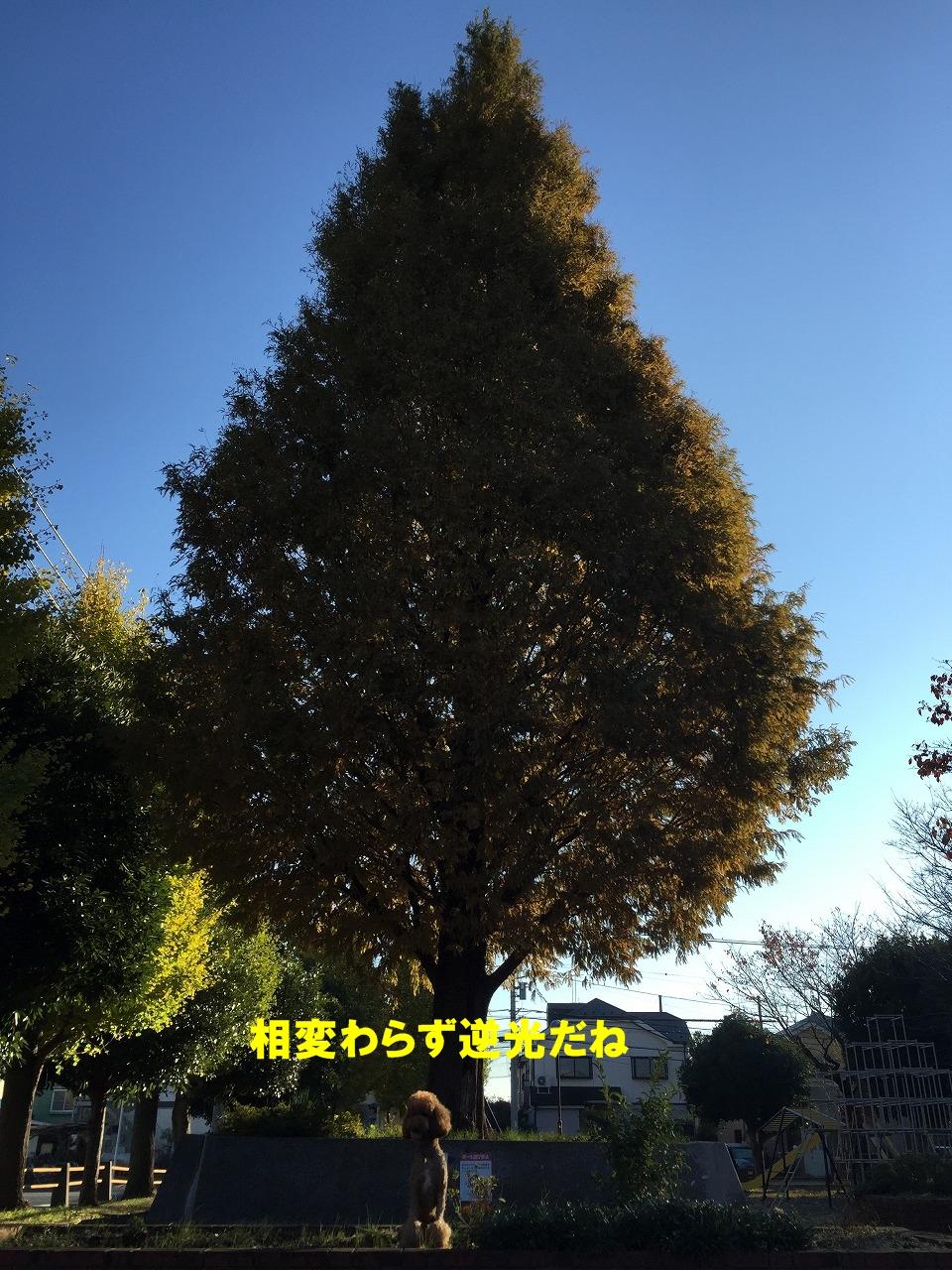 142c-028.jpg