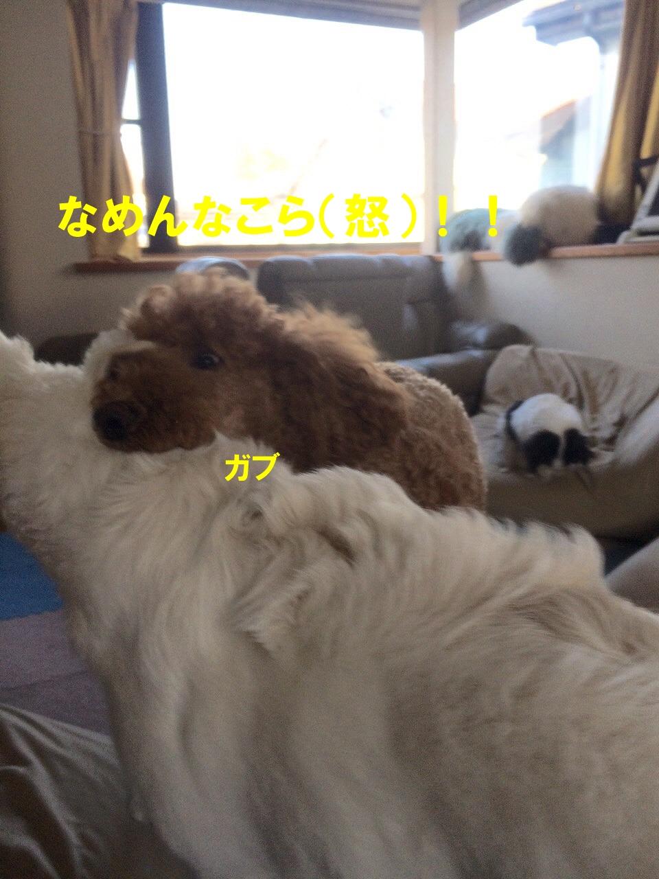 720b-IMG_9655.jpg