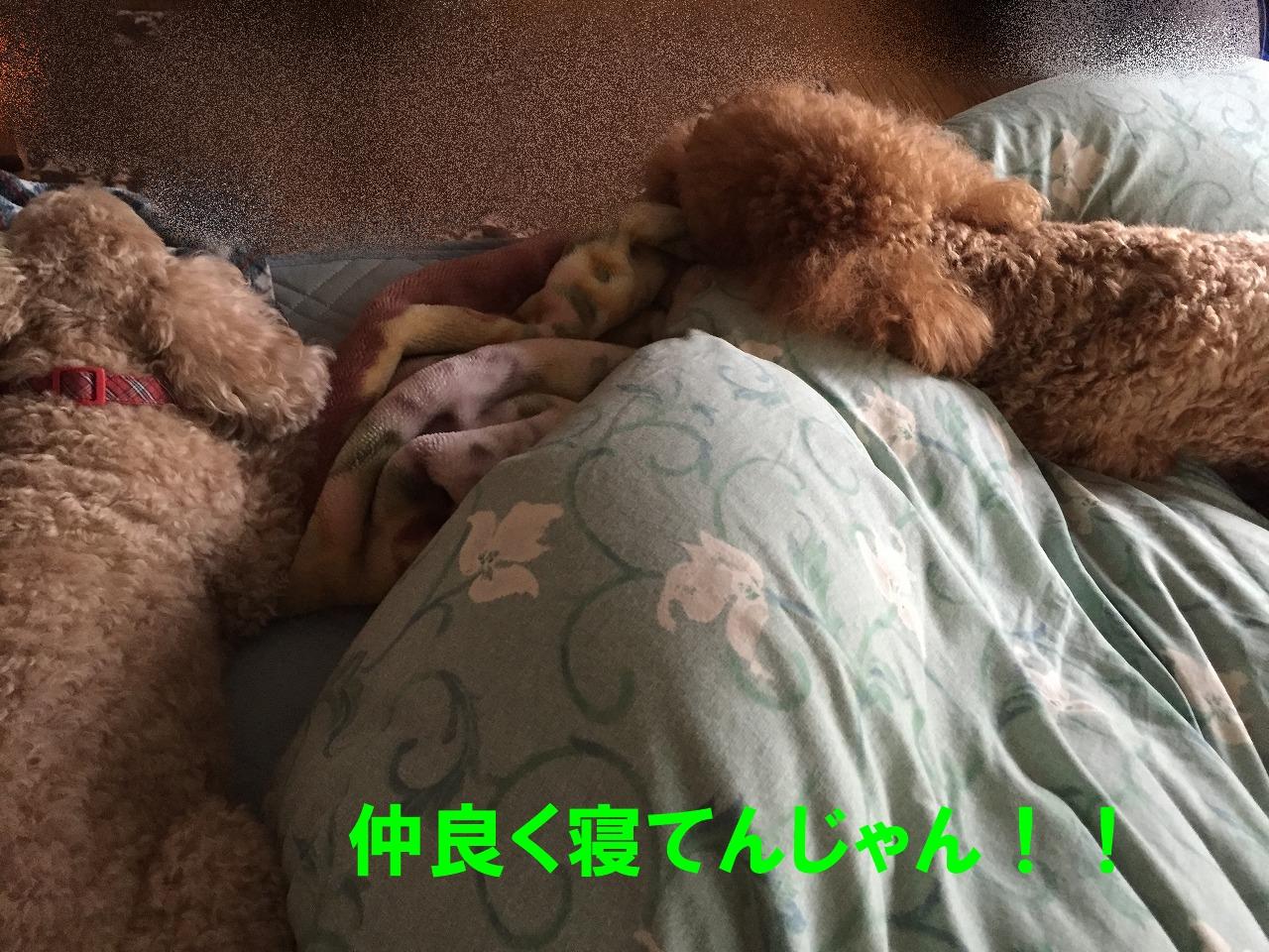 724b-IMG_9687.jpg