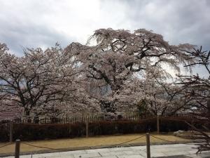 4-3石塚桜外