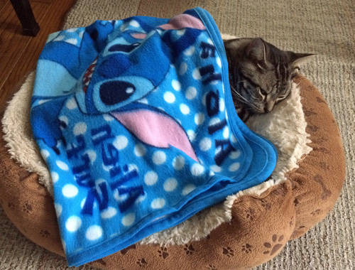寒がりの昼寝