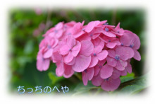 神奈川県小田原市 タキ歯科クリニックBlog-紫陽花