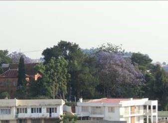 昼南側風景マダガスカル2