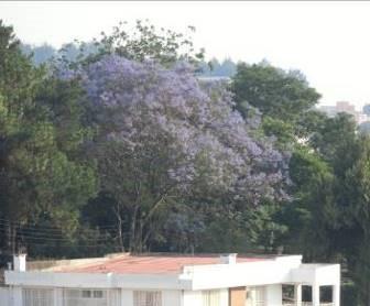 昼南側風景マダガスカル3