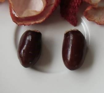ライチー種子
