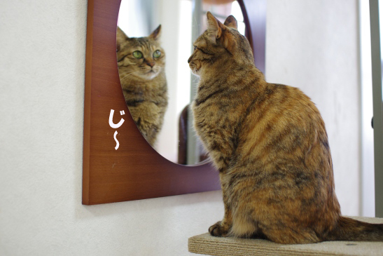 鏡も観察してる^キララssコピー