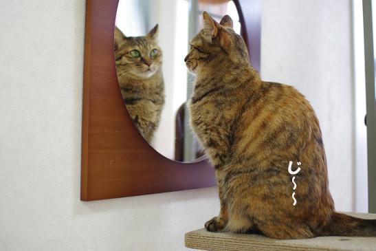 I鏡ds0-d1のコピー