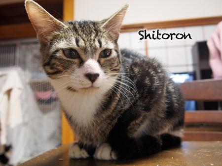 シトロン2015.11