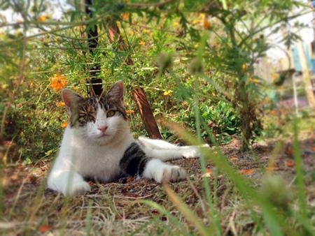 母猫2015.10.24