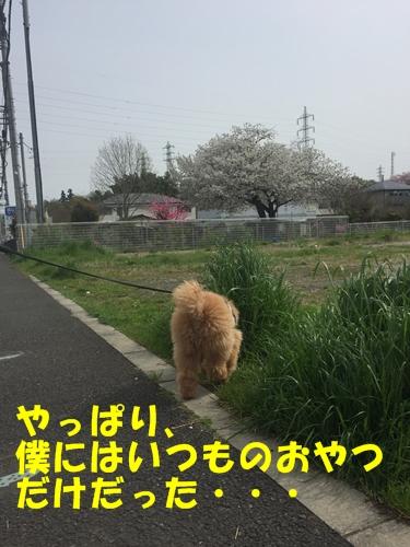 IMG_3139-1.jpg