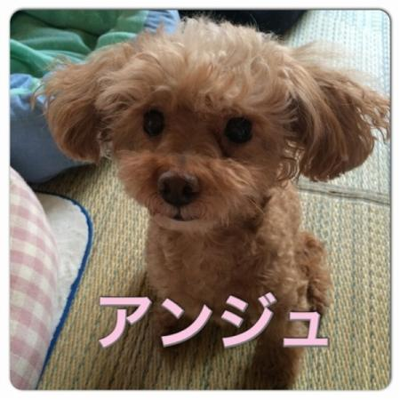 annzyu_convert_20151027171049.jpg