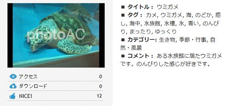写真AC ウミガメ