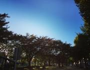 sky2015110304.jpg