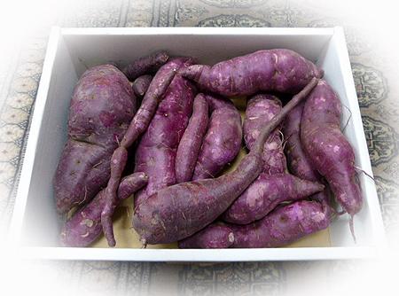 紫芋の収穫