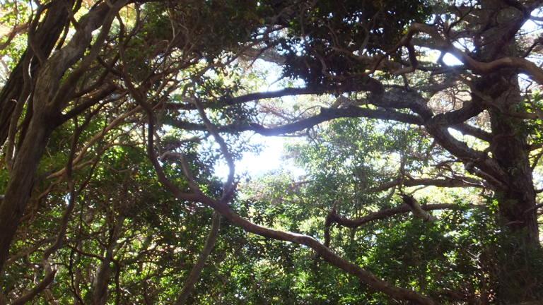 枝の中の光
