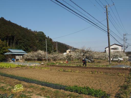 20160227・越生梅見・ボツ11