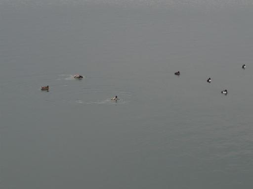 20160312・狭山湖へ2-16
