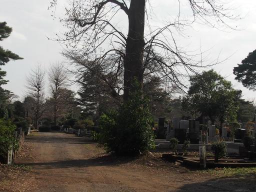 20160321・墓参りと桜2-22