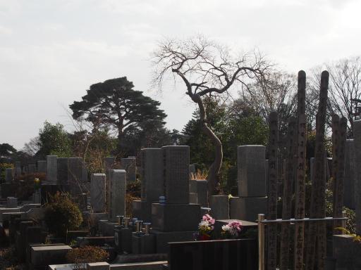 20160321・墓参りと桜3-07・やってられないので散歩