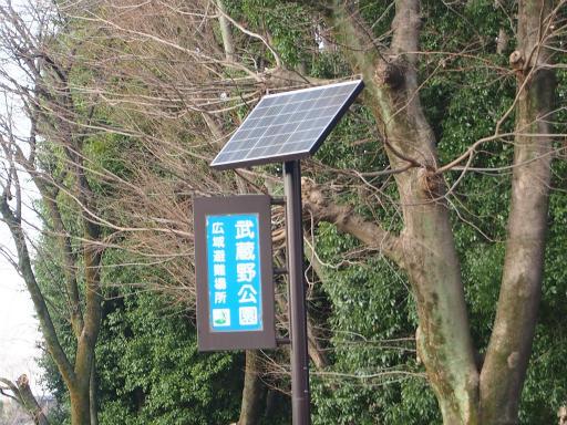 20160321・墓参りと桜3-13