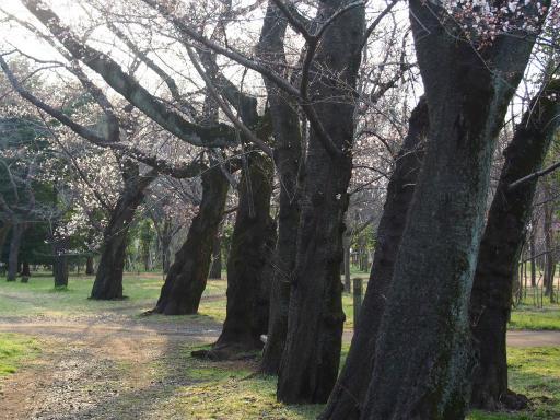 20160321・墓参りと桜3-22