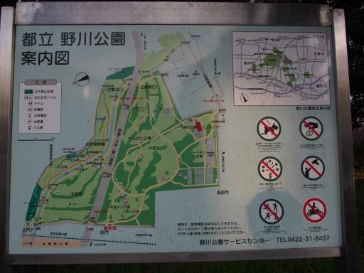 20160321・墓参りと桜4-06・大
