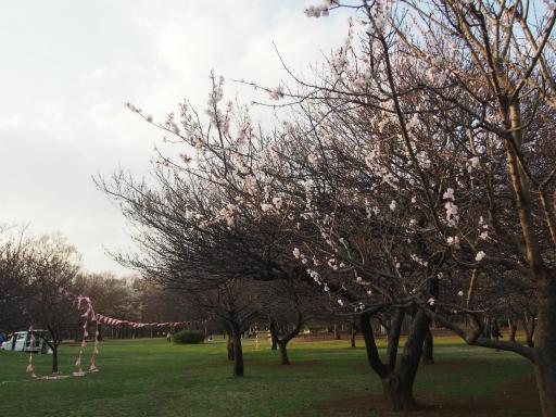 20160321・墓参りと桜4-11