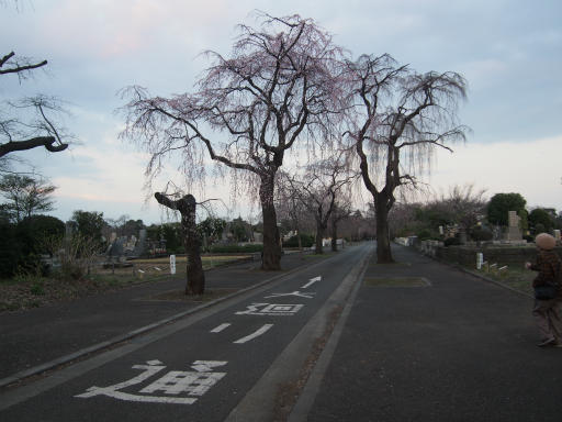 20160321・墓参りと桜4-29