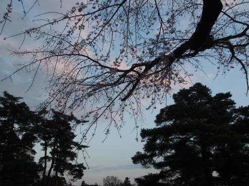 20160321・墓参りと桜空22