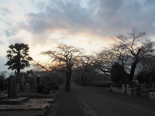 20160321・墓参りと桜空21・多磨霊園内のシダレザクラ