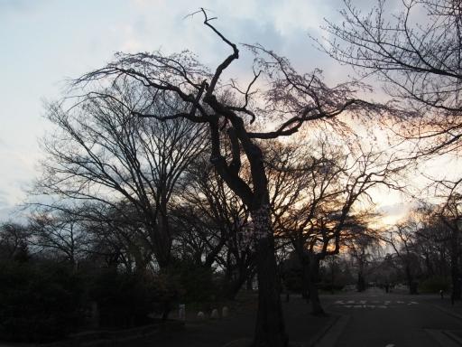 20160321・墓参りと桜空おまけ大1