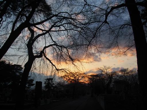 20160321・墓参りと桜ビミョー5