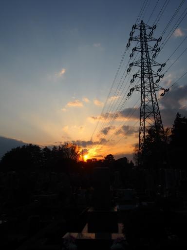 20160321・墓参りと桜ビミョー3