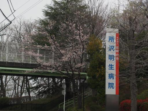 20160402・アルペンルート桜1-05