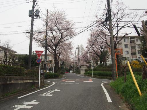 20160402・アルペンルート桜1-04