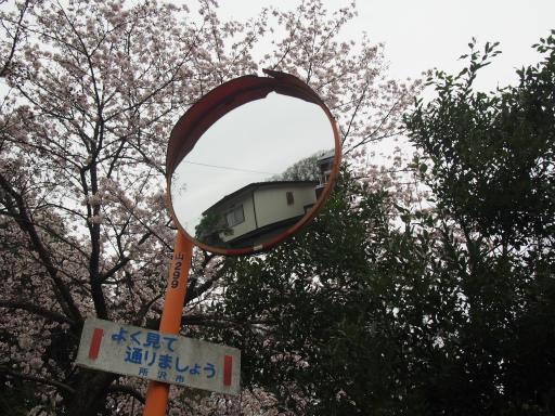 20160402・アルペンルート桜1-07